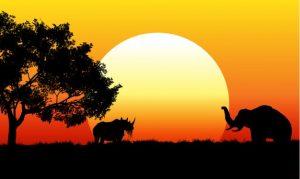Savanne med flot solopgang